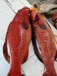مطعم أسماك الناجل