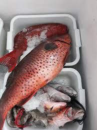 أسماك الناجل